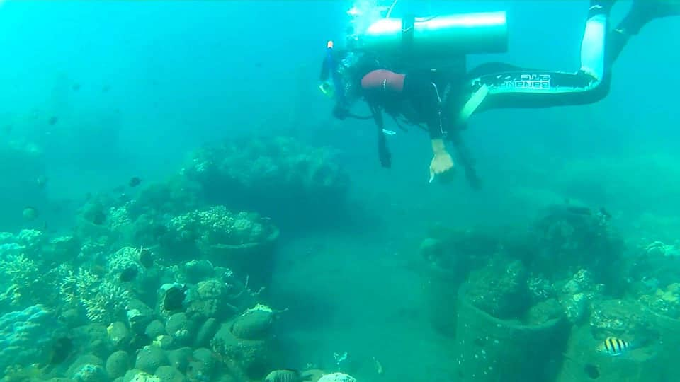 Coral Reef Restoration Project Update. (October 2018)